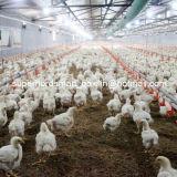Strumentazione automatica di allevamento di pollame di alta qualità