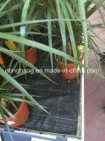 Cerca tecida preto dos sedimentos do fio do jardim da tela dos PP