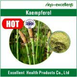 Kaempferol natural do pó do extrato de Japonica do Sophora