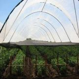 сеть тени HDPE девственницы тарифа тени 80% 95%