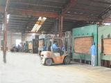 Madera contrachapada comercial de la base de /Eucalyptus de la base del álamo para los muebles o la construcción