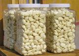 Frischer abgezogener weißer Knoblauch für den Export