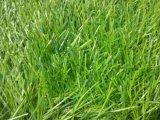 総合的な芝生、身に着け抵抗20mm-50mmの合成物質の草