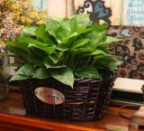 (BC-WF1025) respetuoso del medio ambiente natural hecho a mano del sauce cesta de la flor