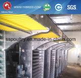Type neuf 6 cages du prix usine de modèle H de couche de batterie de rangées