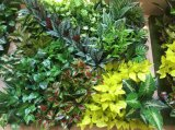 Заводы высокого качества искусственние и цветки зеленой стены Gu20170223150528