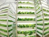 Crescer a tira clara para a fábrica vegetal da planta