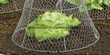 Compensation de fil galvanisée par fleur de poulet de jardin de Sailin