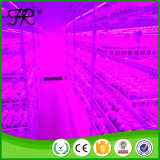 Unterschiedliche T8 LED wachsen für Pflanzendas wachsen hell