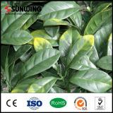 الصين بالجملة حارّ بسهولة يجمّع خضراء اصطناعيّة لبلاب كرب سياج