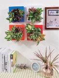 実質の緑プラント小型壁の庭