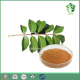 Heißes olivgrüner Blatt-Auszug des Verkaufs-Oleuropein-20%-60%