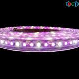 Striscia impermeabile di SMD5050 84LEDs RGBW LED