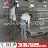 Горячее гальванизированное автоматическое машинное оборудование фермы для цыпленка слоя (A3L120)