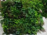 수직 인공적인 녹색 잔디 플랜트 벽 덮개 훈장