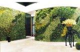 호텔 장식 정원 장식 옥외 사용 인공적인 녹색 벽