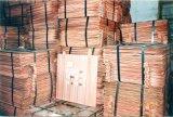 탄자니아에서 공장 Diectly 판매 구리 음극선