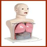 Modello medico di professione d'infermiera, alimentazione nasale e simulatore del lavaggio gastrico