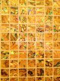 Mosaico del shell de Puau del shell del olmo