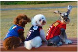 Vêtements de chien pour animaux de compagnie