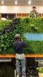 Het kunstmatige Behandelende Gras van de Decoratie plant Muur