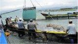 Jaula de la acuacultura