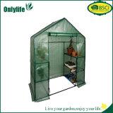 La verdura del giardino di Onlylife coltiva la serra