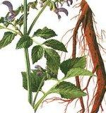 전통 중국 의술 Salvia Miltiorrhiza 분말 추출 5:1, 10:1, 20:1
