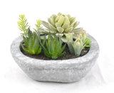 Planta artificial suculenta mezclada para la decoración de cualquie Lugar-Hogar/oficina/barra públicos etc
