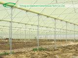 Multi serra della Rosa della portata di stile europeo per il agjriculture
