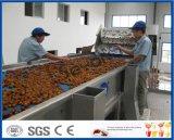 Chinesische aufbereitende Zeile der Dattel/der Jujube oder des Weißdorns