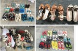 نمو يستعمل أحذية, أحذية غير أصليّ, يستعمل رياضات أحذية