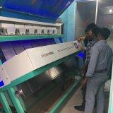 Hons+ de de Beste Verkopende Rijst van de Fabriek & Sorteerder van de Kleur Semase, de Sorterende Machine van de Kleur