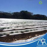 Tela não tecida tratada UV dos PP para a tampa da colheita da agricultura