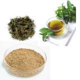 緑の茶葉のエキスの10:1の粉
