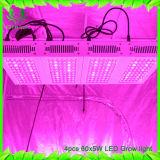 i doppi chip che 300W il LED coltiva Specturm pieno chiaro coltivano la lampada per le piante d'appartamento idroponiche Veg della serra ed il fiore