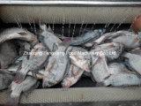 기계를, 생선 비늘 Peeler 제거하는, 큰 유형 생선 비늘 근채류 Peeler 및 세탁기