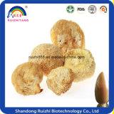 GMP 공장 최고 제품 고품질 원숭이 헤드 버섯 추출 Hericium Erinaceus 추출 30% 다당류