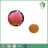 Polyphénols normaux élevés d'extrait d'Apple 50%, 70%, 75%, 80%