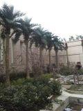 Piante & fiori artificiali della palma Gu20170208wa0003 dei Cochi