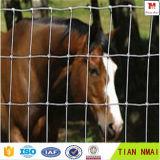 Сетка лошади загородки лошади с высоким качеством и хорошим ценой