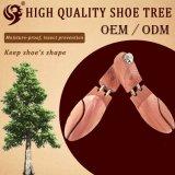 [أدم] حذاء ملحقة, حذاء شجرة