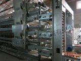 Pollo durable ISO9001 certificado jaula del buen diseño