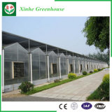 Парник листа поликарбоната земледелия для овощей
