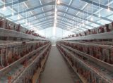 Cage de poulet automatique pour Poutry Farm