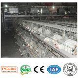 Gaiola galvanizada quente da grelha da galinha do equipamento das aves domésticas do standard internacional
