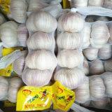제안 알맞은 가격 신선한 마늘 및 더 좋은 품질