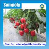 コショウのための中国の製造者の冷たい冬の太陽温室