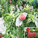 Coperchio non tessuto a gettare della frutta
