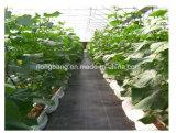 Anti-UVlandwirtschaftliche pp. Weed Plastiksteuerung Agrotextile China-